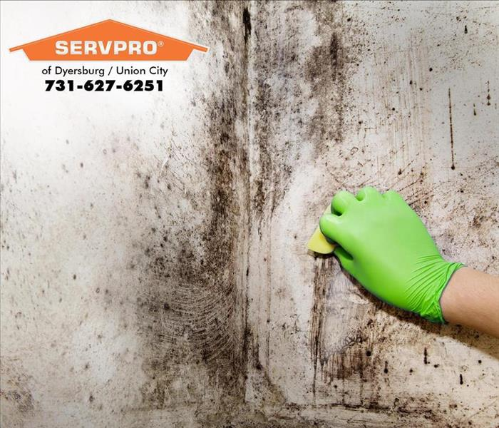 Mold Remediation After Storm Damage Can Cause Mold